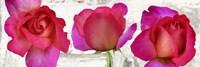Spring Roses Fine-Art Print