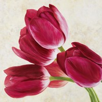 Tulip Concerto (Detail) Fine-Art Print