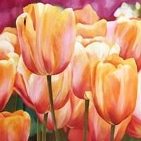 Spring Tulips I Fine-Art Print
