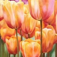 Spring Tulips II Fine-Art Print