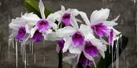 Orchid Blackboard Fine-Art Print