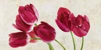 Tulip Concerto Fine-Art Print