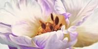 Tulipe Fine-Art Print