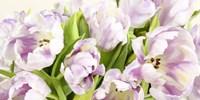 Tulipes en Fleur Fine-Art Print