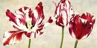 Tulipes Royales Fine-Art Print