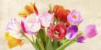 Tulips in Spring Fine-Art Print