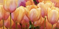 Summer Tulips Fine-Art Print