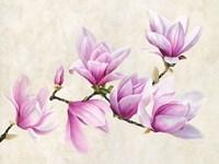 Ramo di Magnolia Fine-Art Print