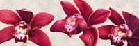 Eleganti Orchidee Fine-Art Print