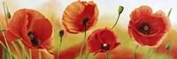 Poppies in the Wind Fine-Art Print