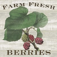 Farm Fresh Berries I Fine-Art Print