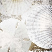 White Shells II Fine-Art Print
