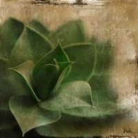Succulent II Fine-Art Print