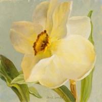 Daffodil Sky II Fine-Art Print