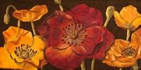 Dazzling Poppies I (black background) Fine-Art Print