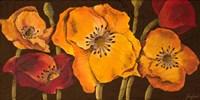 Dazzling Poppies II (black background) Fine-Art Print
