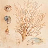 Coral Medley II Fine-Art Print