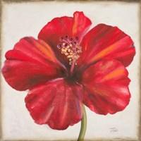 Red Hibiscus Fine-Art Print