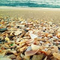 Shells Beach II Fine-Art Print