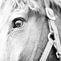 In the Stable I Fine-Art Print