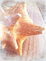 Conch II Fine-Art Print