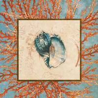 Coral Medley Shell II Fine-Art Print