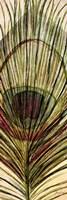 Peacock Feather II Fine-Art Print