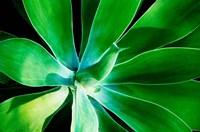 Green Intrigue Fine-Art Print