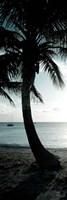 Cool Bimini Palm II Fine-Art Print