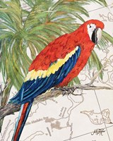 Another Bird in Paradise I Fine-Art Print