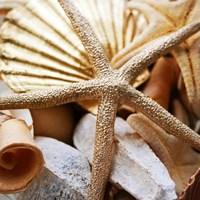 Gold Starfish II Fine-Art Print