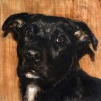Puppy Dog Eyes I Fine-Art Print