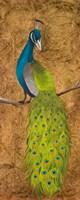 Peacocks II Fine-Art Print