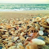 Shells Beach I Fine-Art Print