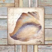 Beach Shell II Fine-Art Print