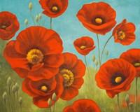 Field of Poppies I Fine-Art Print