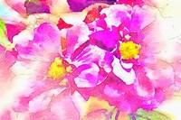 Magical Garden Fine-Art Print