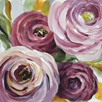 Ranunculus Rosa II Fine-Art Print