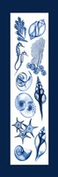 Sealife Blue Fine-Art Print