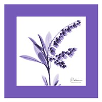 Lily Of The Valley Bordered Fine-Art Print