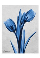 Midnight Tulips Panel Fine-Art Print