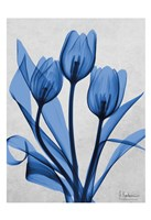 Midnight Tulips 2 Fine-Art Print