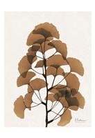 Aged Ginko Fine-Art Print
