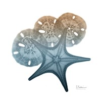 Steel Hues Starfish and Sand Dollar Fine-Art Print