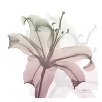 Neapolitan Lily Fine-Art Print