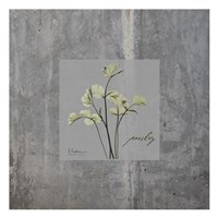 Concrete Parsley Fine-Art Print