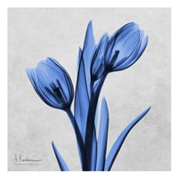Midnight Tulips Fine-Art Print