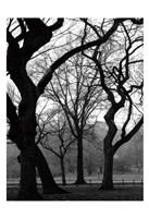 Central Park Dancing Trees Fine-Art Print