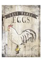 Free Range Eggs Fine-Art Print