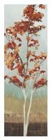 Maple Tree III Fine-Art Print